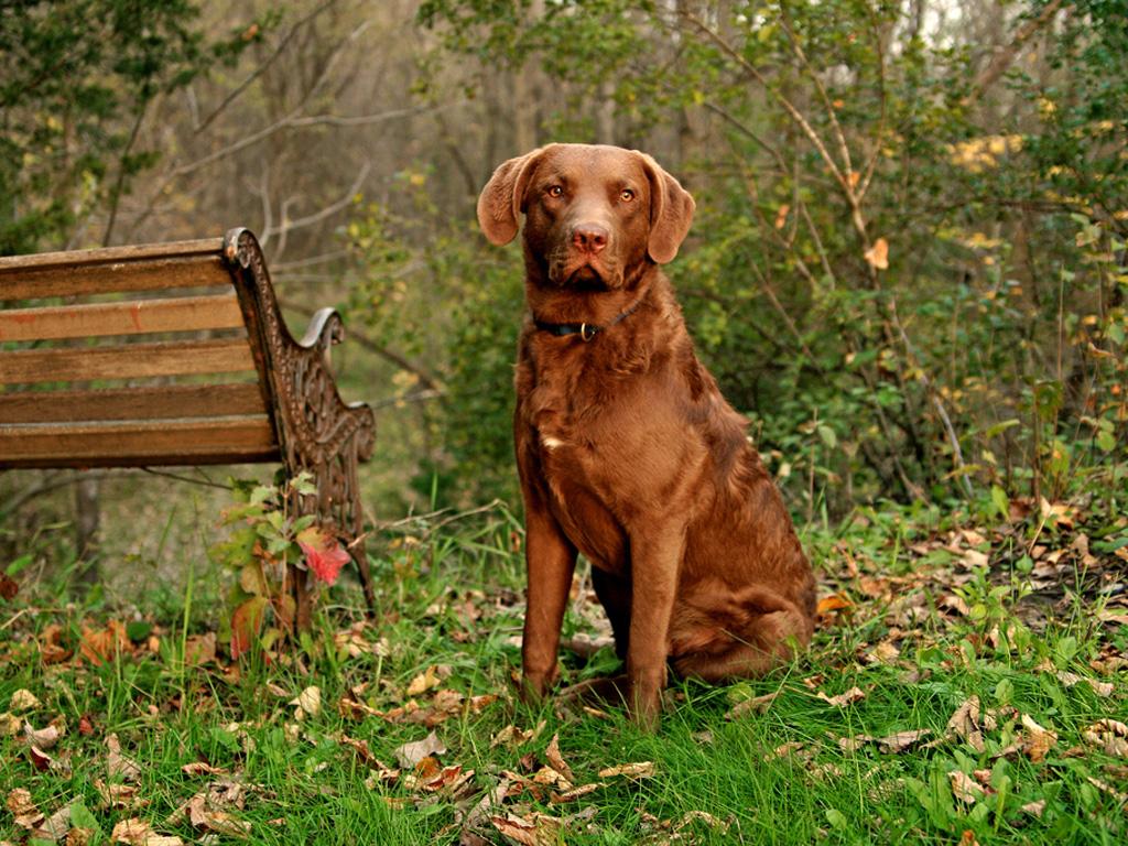 Apprendre l 39 ordre assis votre chien cimod for Cout d un chien assis
